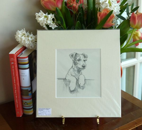 Terrier with paws up, looking over fence - Ter B27 - 1930's print by K F Barker